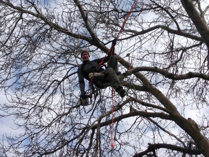 contact arborist tree service spokane washington